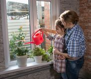 Mom and daughter watering flowers in the apartment stock photo