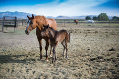 Mom and foal Stock Photo