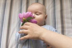 Mom gives her little baby a flower. Mom gives her little baby a pink flower Royalty Free Stock Photos