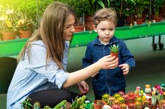 Mom and her baby boy in a plant shop looking at cacti. Gardening In Greenhouse. Botanical garden, flower farming. Horticultural industry concept royalty free stock photo