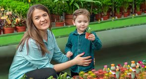 Mom and her baby boy in a plant shop looking at cacti. Gardening In Greenhouse. Botanical garden, flower farming royalty free stock image