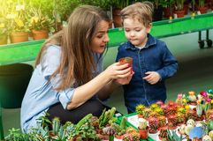 Mom and her baby boy in a plant shop looking at cacti. Gardening In Greenhouse. Botanical garden, flower farming stock photography