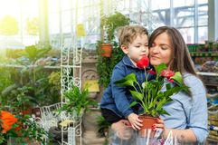 Mom and her baby boy in a plant shop looking at flower. Gardening In Greenhouse. Botanical garden, flower farming royalty free stock photos