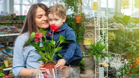 Mom and her baby boy in a plant shop looking at flower. Gardening In Greenhouse. Botanical garden, flower farming royalty free stock photo