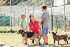 Mom with her sons walking dogs of an animal shelter. To get to know them Stock Photography