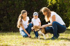 Mom with kids on a walk. Happy mother with her daughter, little son and beagle dog for a walk royalty free stock photography