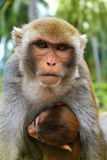 Mom monkey with a baby on Monkey Island, Vietnam Stock Images