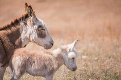 Mom and newborn donkey