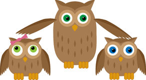 Mom Owl Protects their Owl Babies Stock Images