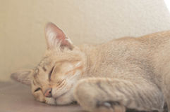Mom. Rest for her kitties that born in soon royalty free stock image