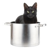 Mom's best helper - a black cat sitting in a saucepot. Mom's best helper - a black cat sitting in a sauce pot, ready to help Stock Image