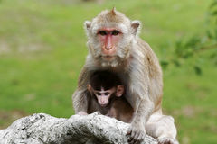Mom and son. A mother monkey with her sun in forest Stock Photo
