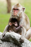 Mom and son. A mother monkey with her sun in forest Stock Photos