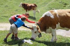 Mom and son caressing a cow during summer mountain holidays Royalty Free Stock Image