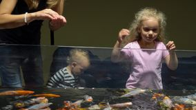 Mom with son and daughter feeding colorful fishes in big aquarium. Gimbal motion stock video