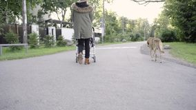 Mom and son and dog walking stock video footage