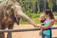 Mom and son feed the elephant at the zoo.  royalty free stock photos