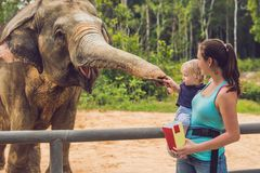 Mom and son feed the elephant at the zoo.  royalty free stock image