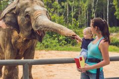 Mom and son feed the elephant at the zoo.  royalty free stock images