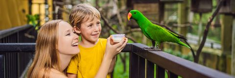 Mom and son feed the parrot in the park. Spending time with kids concept BANNER, LONG FORMAT stock images