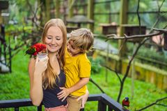 Mom and son feed the parrot in the park. Spending time with kids concept stock photography
