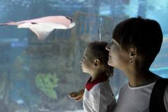 Mom and son looking at tropical fishes Royalty Free Stock Image