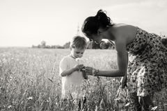 Mom and son playing in the field. Family fun. A beautiful summer day. The joy and fun Stock Photography