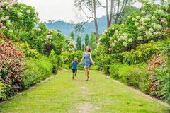 Mom and son are running around in the blooming garden. Happy fam. Ily life style concept stock photo