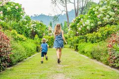 Mom and son are running around in the blooming garden. Happy fam. Ily life style concept stock images