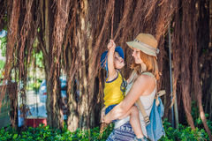 Mom and son on Vietnam travelers are on the background Beautiful tree with aerial roots. Asia Travel concept. Journey through Vietnam Concept Royalty Free Stock Image