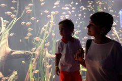 Mom and son watching tropical fishes Stock Photos