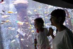 Mom with son watching tropical fishes Stock Photography