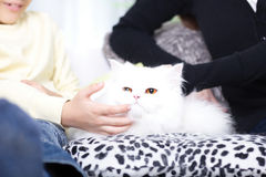 Mom and son with white Persian cat. Mom and son caress Persian cat Stock Photos