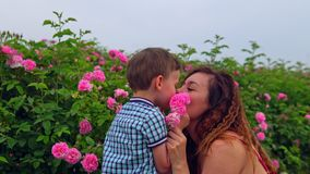 Mom with young son in a field of roses stock video footage