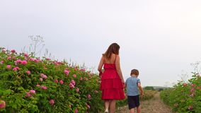 Mom with young son in flowering rose garden stock video