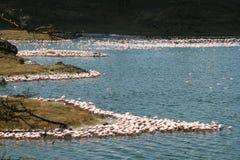 Momella湖 免版税库存图片