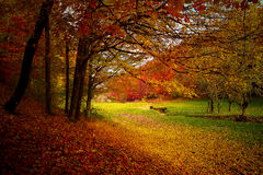 Moment d'automne Images libres de droits