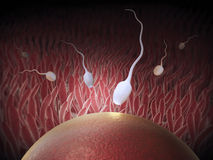 The moment of fertilization. A sperm cell entering the egg Royalty Free Stock Photography