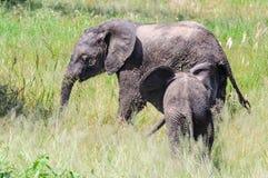 Moment intime des éléphants en parc de Tarangire, la Tanzanie Image libre de droits
