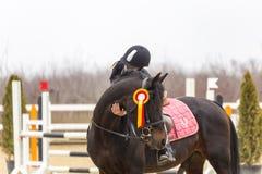 Moment mignon entre une fille et un cheval Photographie stock