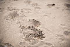 Moment på en sand Arkivfoto