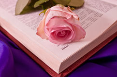 The moment to read is love. This lovley rose is beautiful like the moment to read Royalty Free Stock Photos