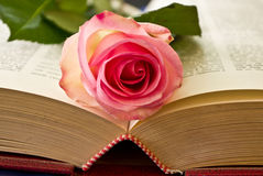The moment to read is love. This lovley rose is beautiful like the moment to read Stock Images