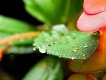 Momenti dopo pioggia Fotografie Stock