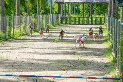 Momento da competição da raça do cão - termine para cães da equitação do macaco Imagem de Stock