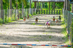 Momento de la competencia de la raza del perro - acabe para los perros del montar a caballo del mono Imagen de archivo