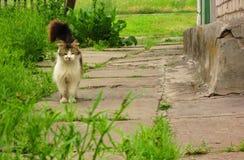 Momento del gatto Fotografia Stock Libera da Diritti