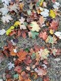 Momento del otoño fotografía de archivo