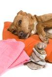 Momento del zen para el perro Foto de archivo libre de regalías