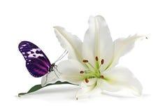 Momento di consapevolezza con il giglio adorabile e la bella farfalla fotografia stock